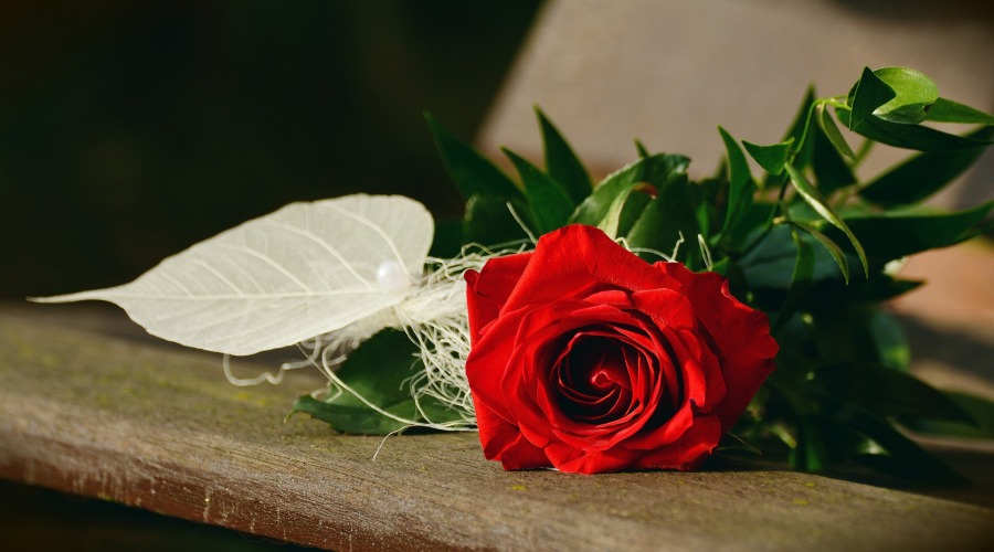 rose-1711224_1920.jpg